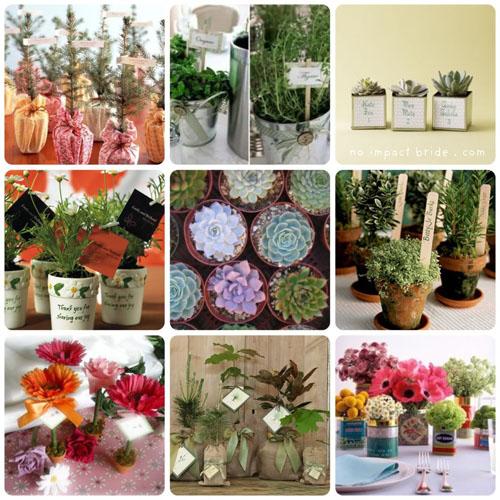 marturii de nunta cu flori si plante